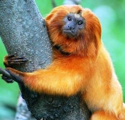 Top 10 Especies del Río Amazonas 1