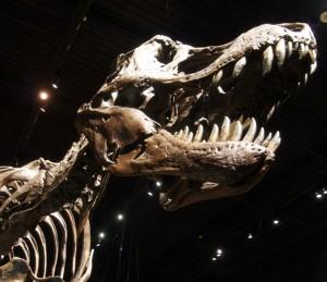 esqueleto de tiranosaurios rex