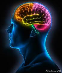 Top 10 alimentos cerebro 1