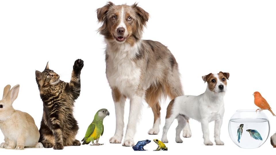 Top 10 mascotas para el hogar 1