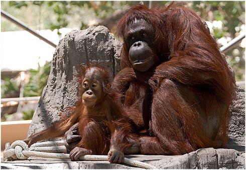 Top 10 mejores madres mundo animal 1