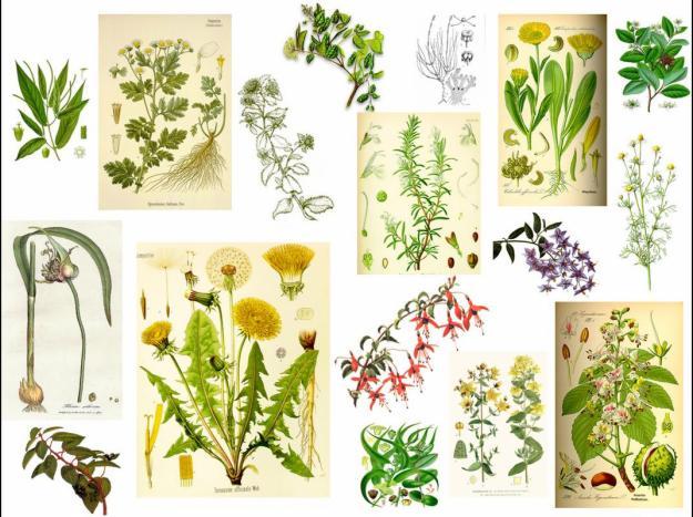 Top 10 mejores plantas medicinales 1